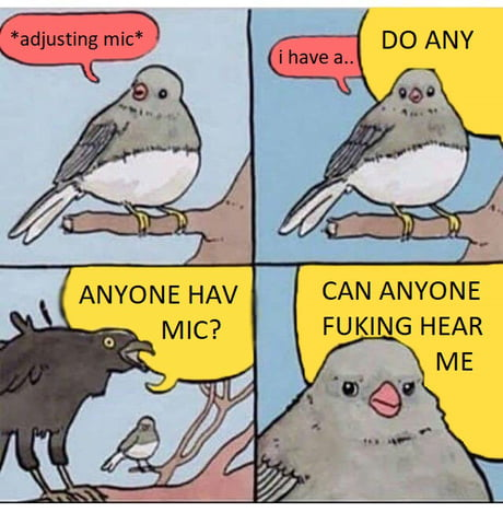 aAxxjPE_460s best 30 bird meme fun on 9gag
