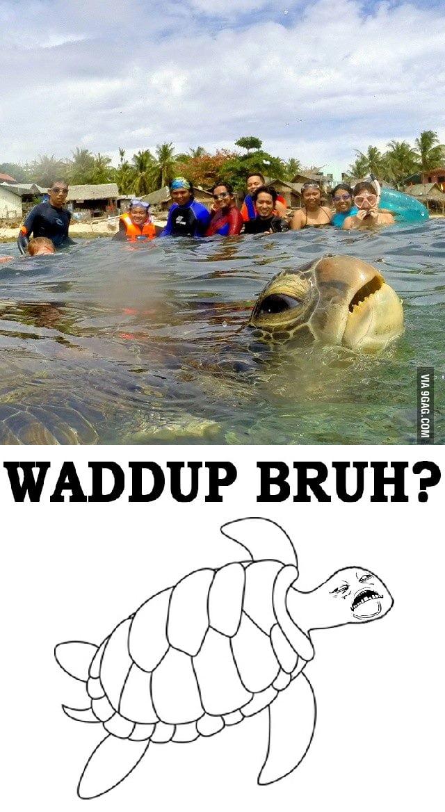 Turtle photobomber