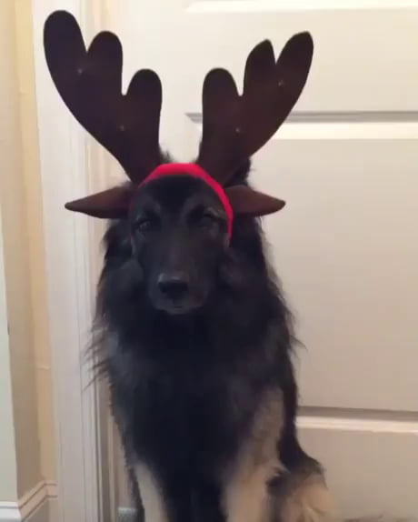 I guess I'm a reindeer now.