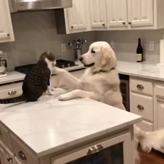 They Are Two Friends