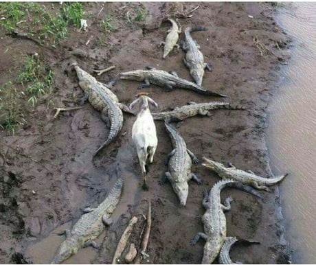Though I walk through the valley of the shadow of death, I will fear no evil