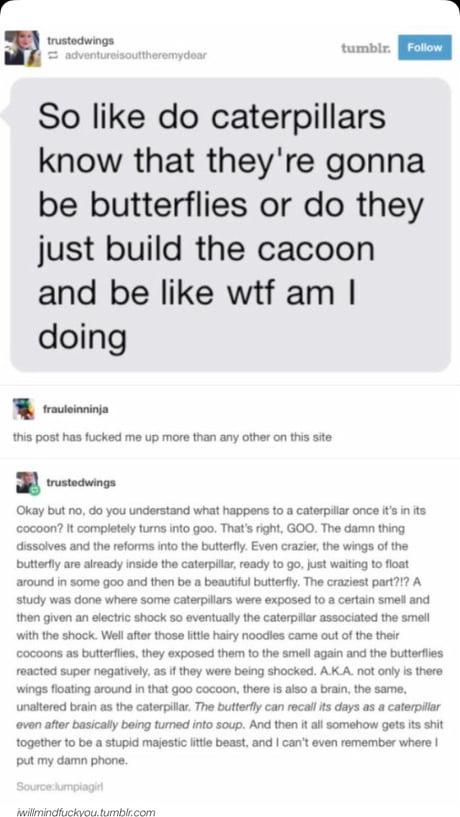 Butterflies are like caterpillar brained
