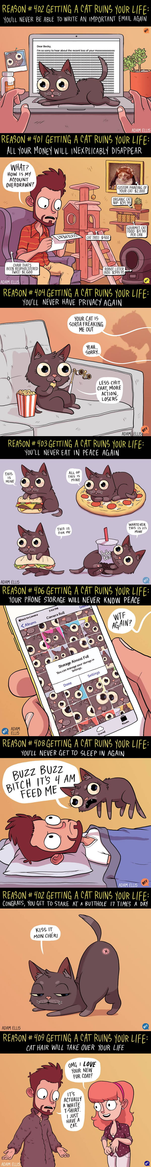 8 Ways Getting A Cat Ruins Your Life (By Adam Ellis)