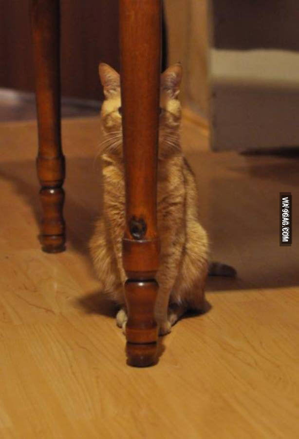 """""""I'm Gonna Hide Behind This Table Leg.. I&"""