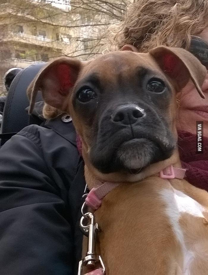 aDoo7RO_700b when my dog looks like the seal meme 9gag