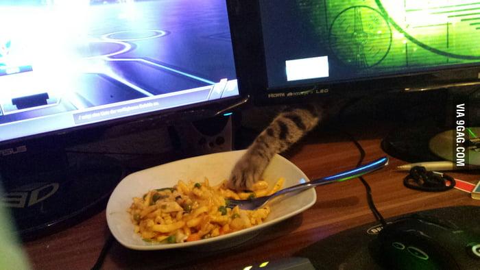 A cat steals an evening meal