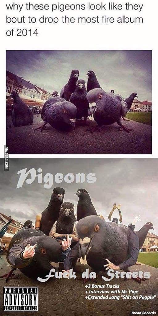 Create Meme A Sad Pigeon