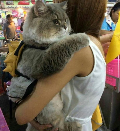 A cat with a backpack. Nothing special.
