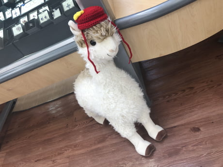 So I ve been making Llamas with Hats jokes at work (Walmart) because of the  Llamas we sell and one of the ladies at work knitted me a hat to put on the  ... 543b0f6da51