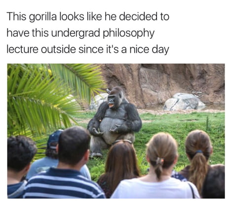 Talking about harambe and shit