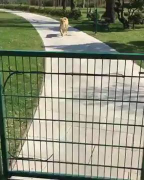 Big cats are love