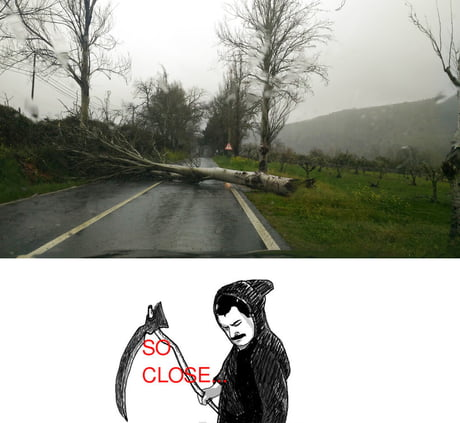 A tree fell right in front of me today just as I was passing. F**k you death! Not today!