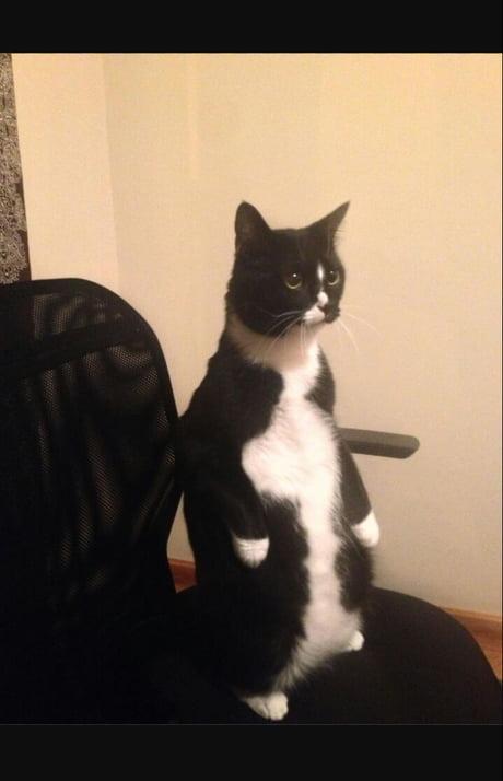 A pyssycat