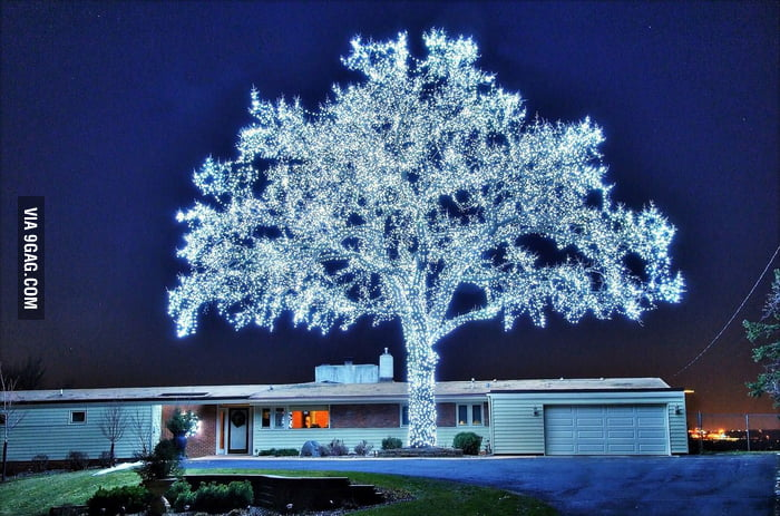 40,000 LEDs and a perfect tree