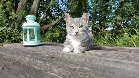I found a stray kitten. So cute!