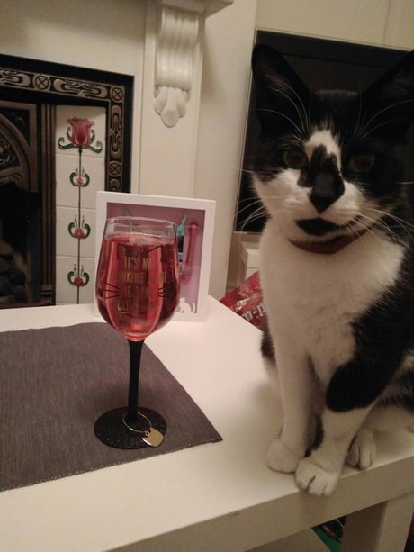 """My glass: """"It's not drinking alone if the cat's home"""" aka my life motto"""