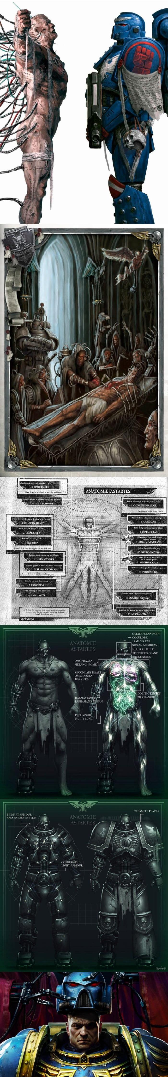 Anatomy of Space marine- Warhammer 40K. - 9GAG