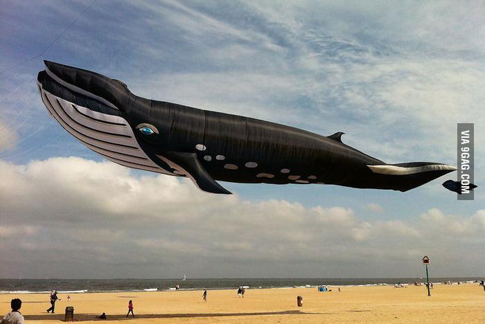 I thought I was having an acid flashback! 27m wale kite