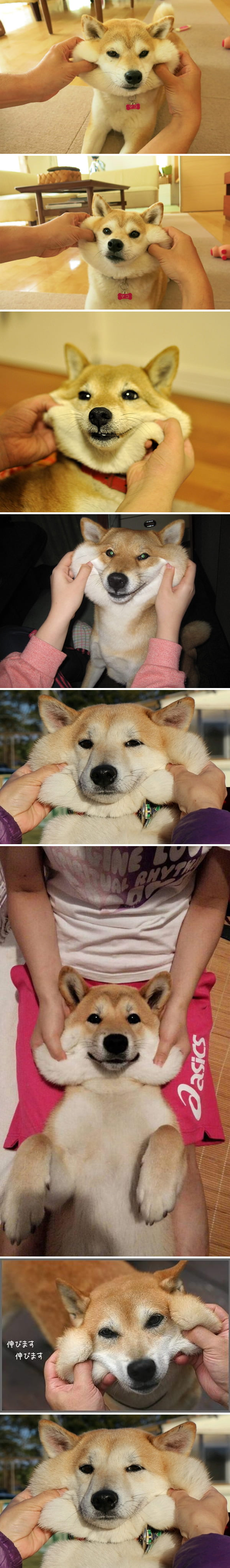 Forget hamsters, doges have the chubbiest cheeks of all!