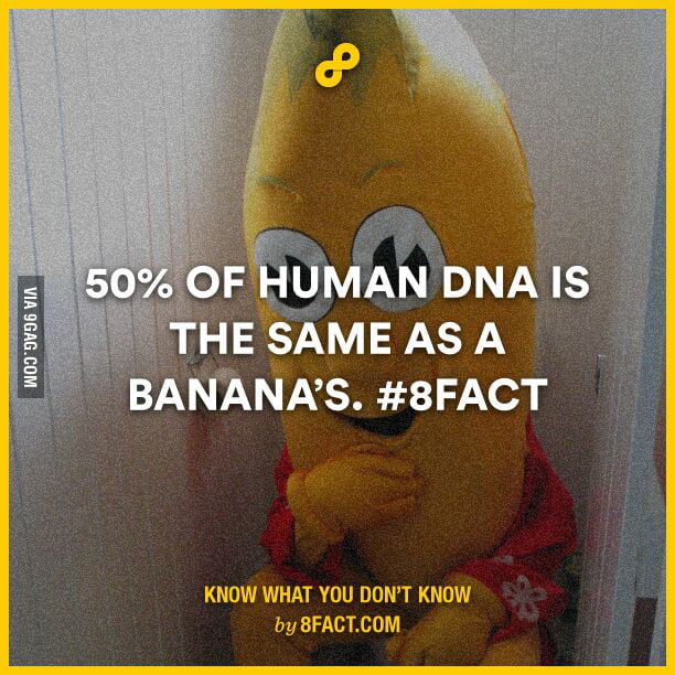 So if a girl likes banana's she likes also 50% of me    - 9GAG