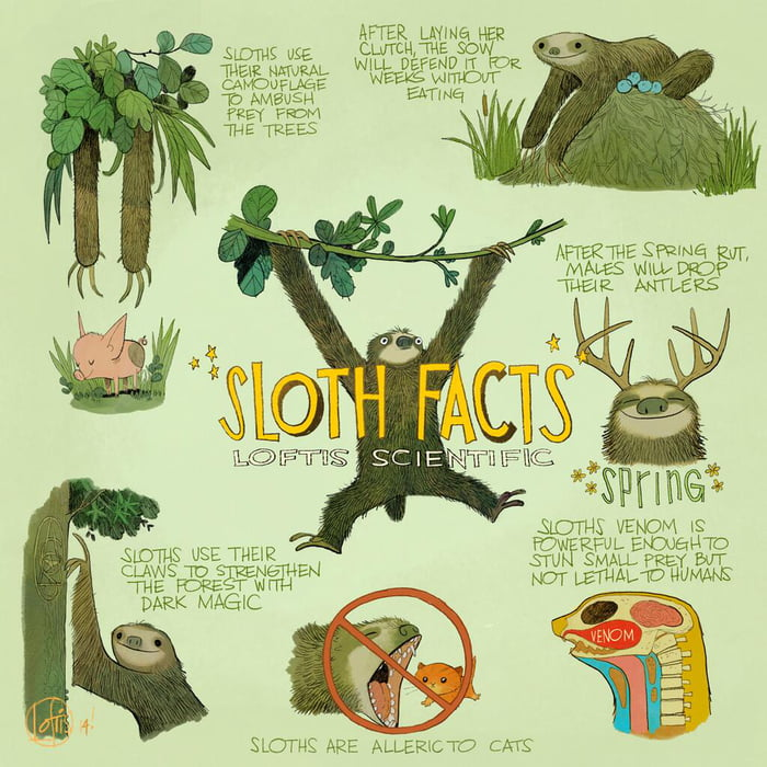 Sloth facts. - 9GAG
