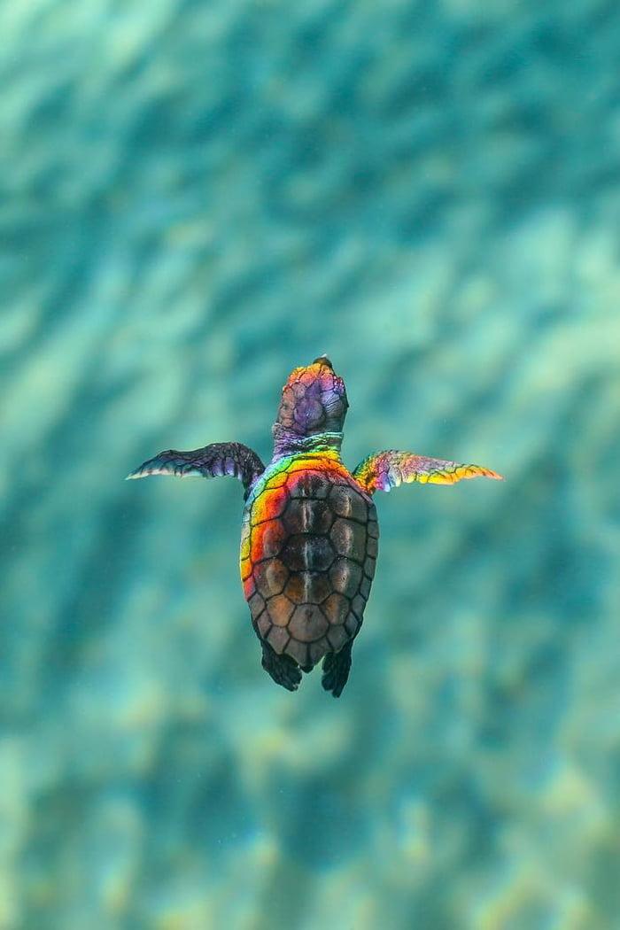 Rainbow Turtle - 9GAG