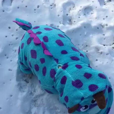 A dinosaur? No, a doggo! Bamboozled again!