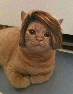 Karen's cat - 9GAG