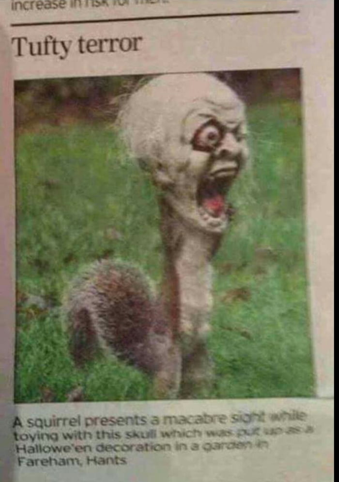 Apparently People Got Scared By This Poor Squirrel With Its Head