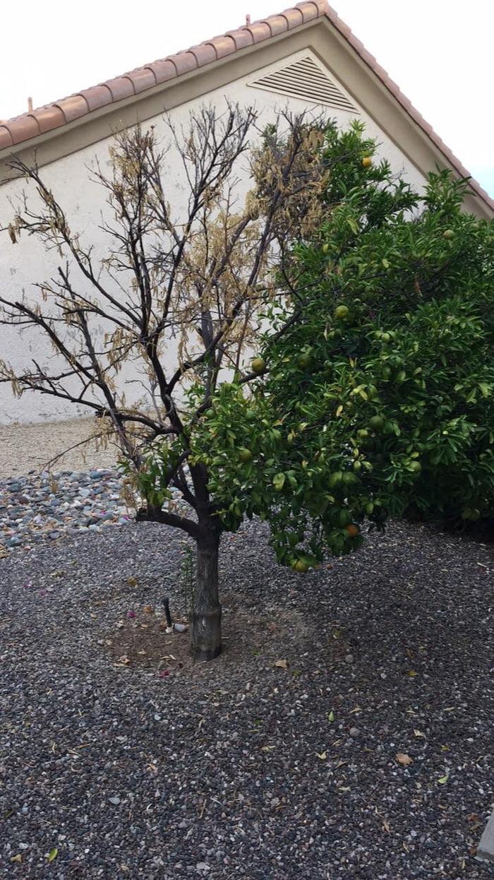 This Half Dead Half Alive Tree 9gag