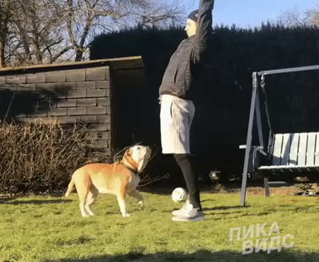 Do yoga with a dog they said ...