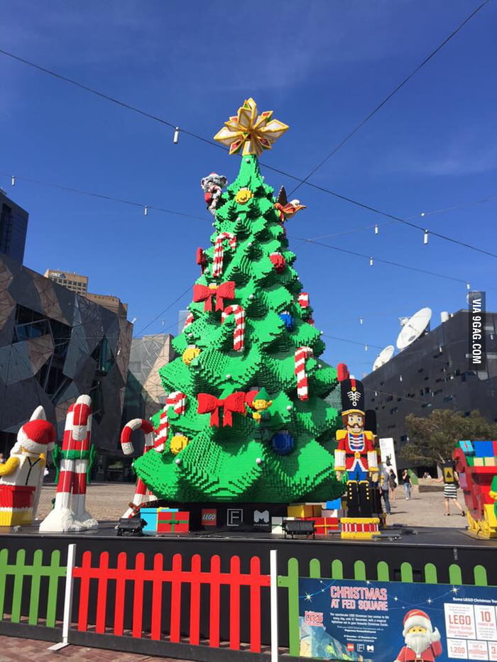 largest christmas tree in southern hemisphere merry christmas - Largest Christmas Tree