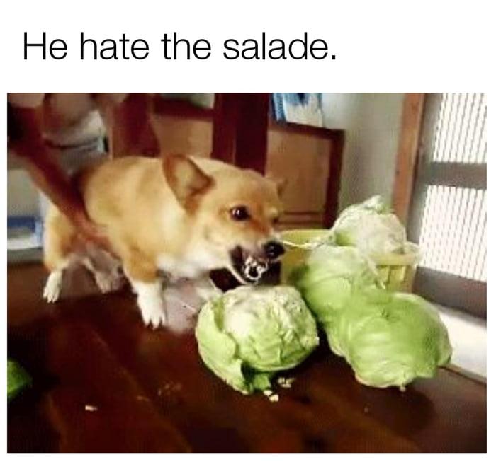 гифка собака жрет капусту месторождения алмазов сегодня