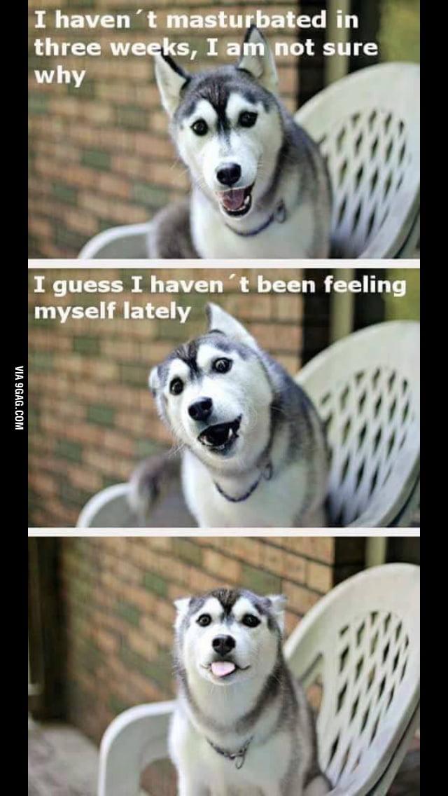 A new Husky has taken over the pun dog meme. - 9GAG