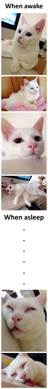 When a gorgeous cat sleeps...
