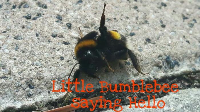 Greetings from a german bumblebee 9gag greetings from a german bumblebee m4hsunfo