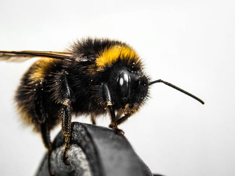 What's your quirky interest that's almost unique only to you? Personally I'm into Entomology (study of insects) and macro photography.