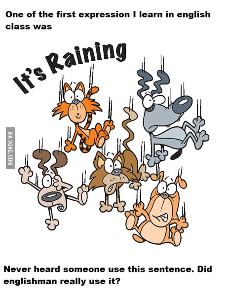 Why Is It Raining Cats And Dogs Why Did I Learnt That 9gag