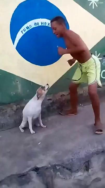 Dancing dog gif