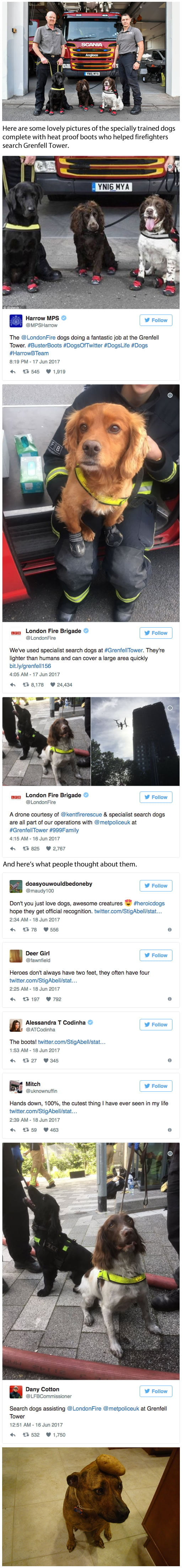 Hero dogs who helped during the Grenfell Tower rescue
