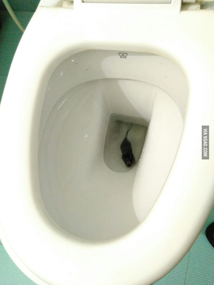 Yes! That\'s a sad little rat in the toilet bowl :3 - 9GAG