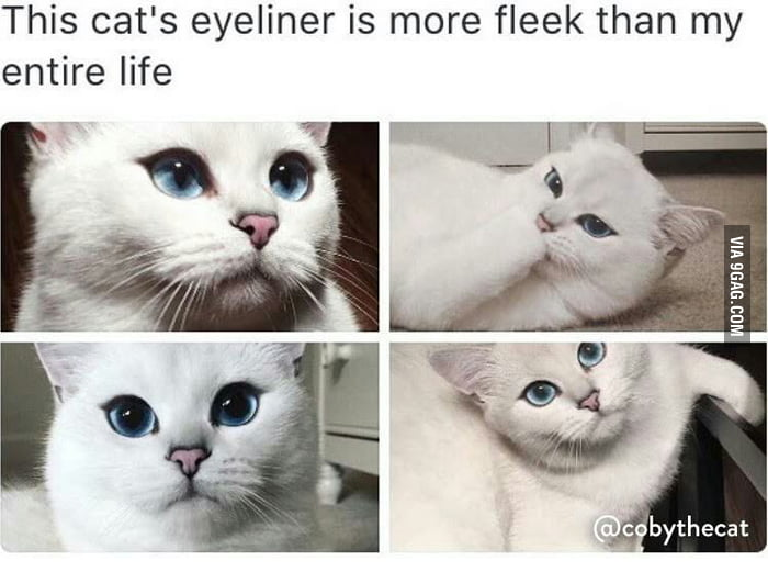 This Cat Is Prettier Than Me