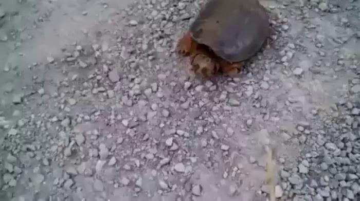Poking a turtle - 9GAG