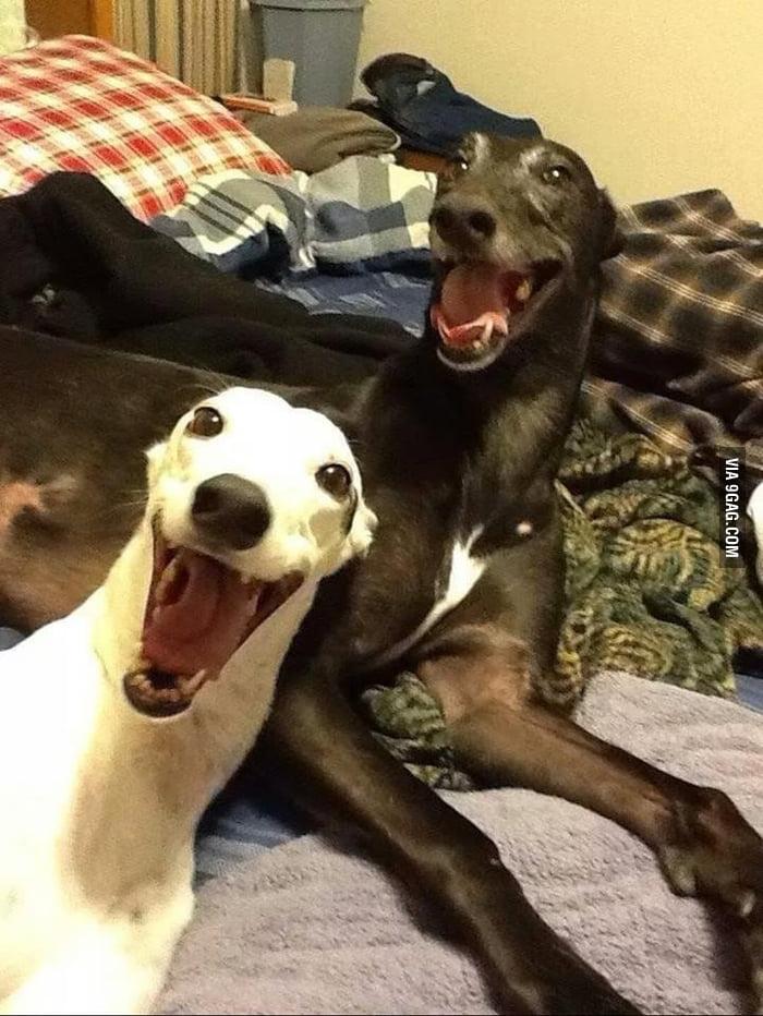 Смешные собаки фото с надписями до слез
