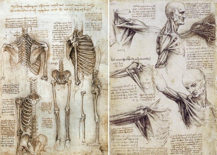 Vinci leonardo drawings da
