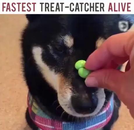 Fastest Treat Catcher alive