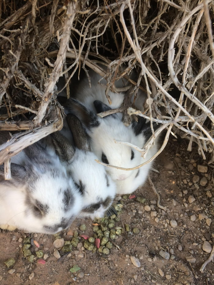 Wild baby bunnies! I go and feed them every day.