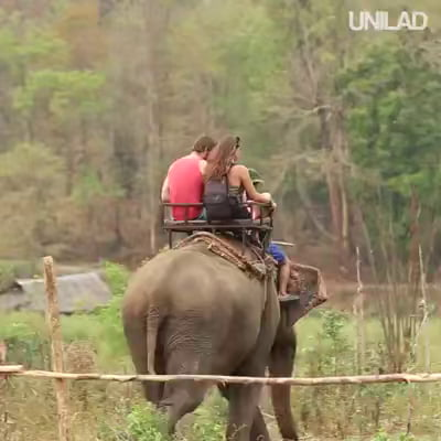 Don't ride elephants in Thailand