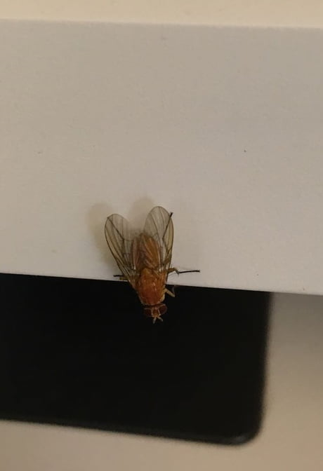 I think I saw an albino fly today at my workplace.