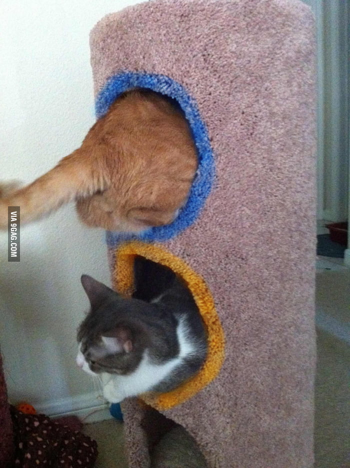 Now they're playing with portals.